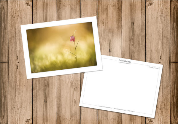Cartes postales nature