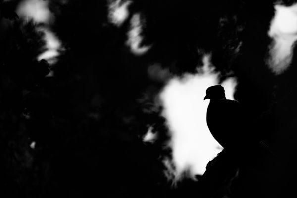 Stage oiseau